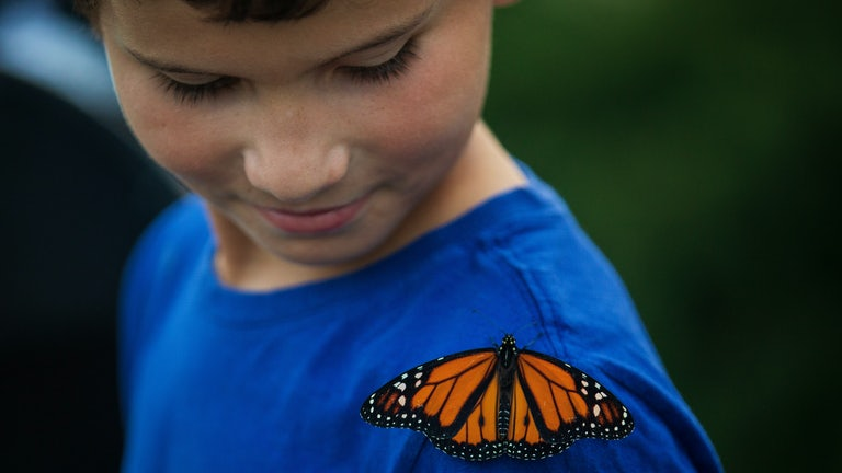 A child look at a monarch butterfly perched on his shoulder.