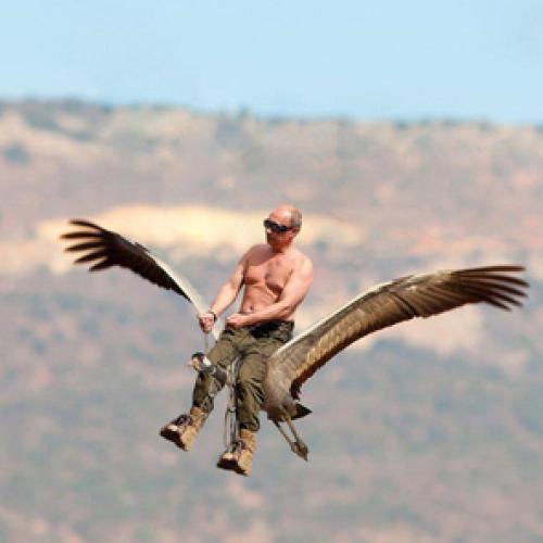 Putin flies with birds jumps the shark new republic