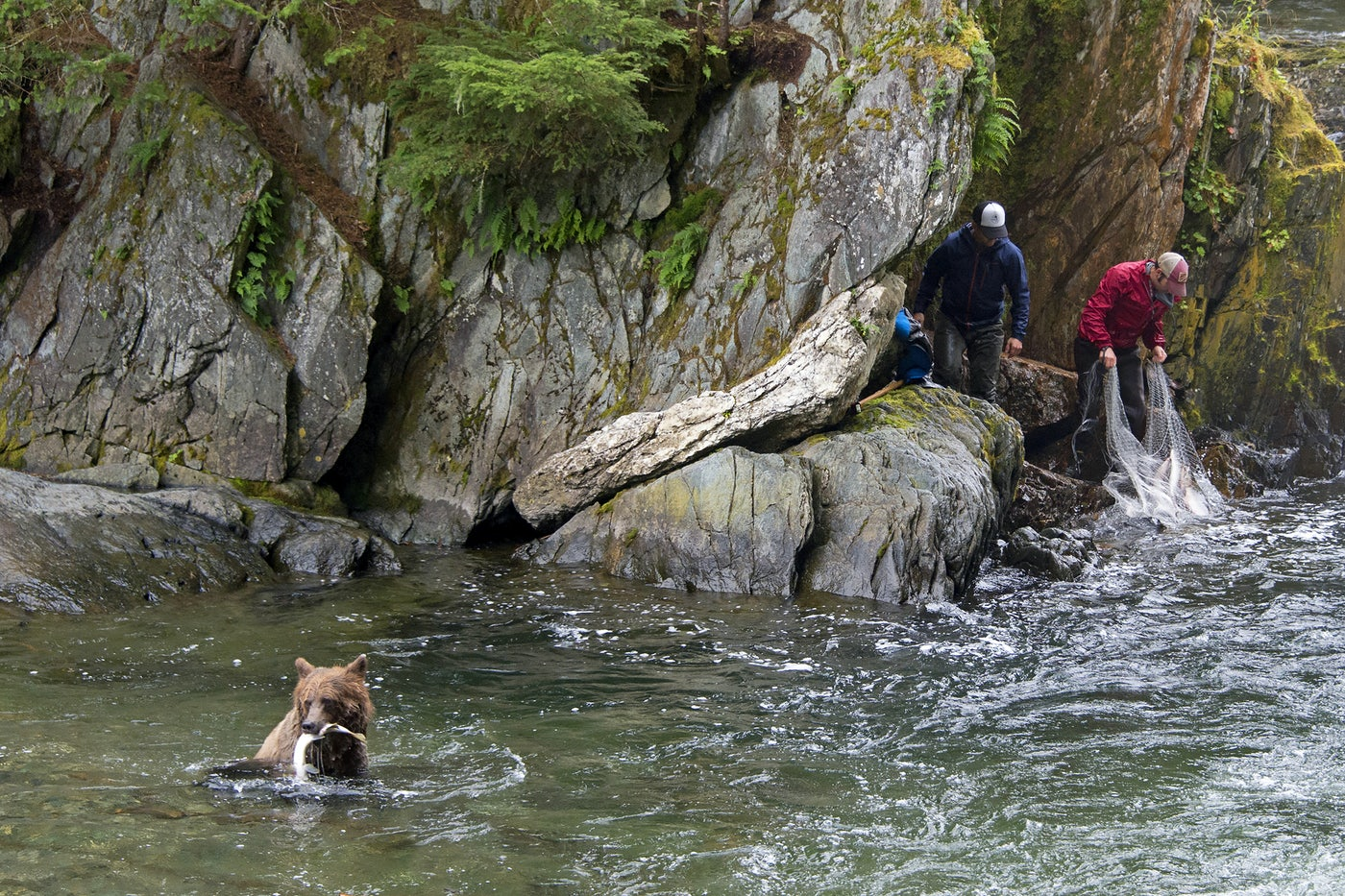 A bear and two humans catch salmon in the Tongass National Forest in Alaska.