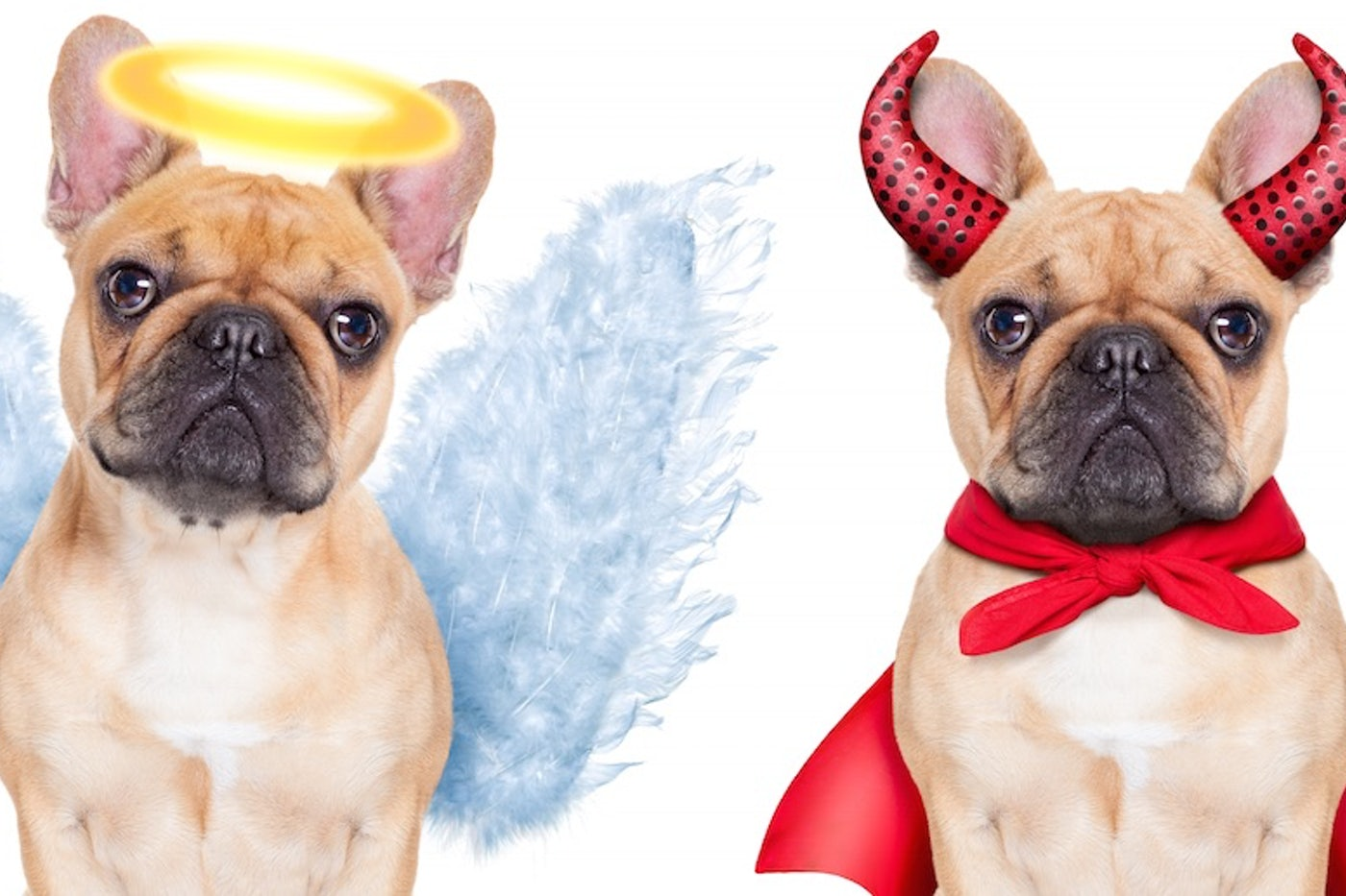 Pope Francis On Dog Heaven All God S Creatures Ascend In Afterlife The New Republic