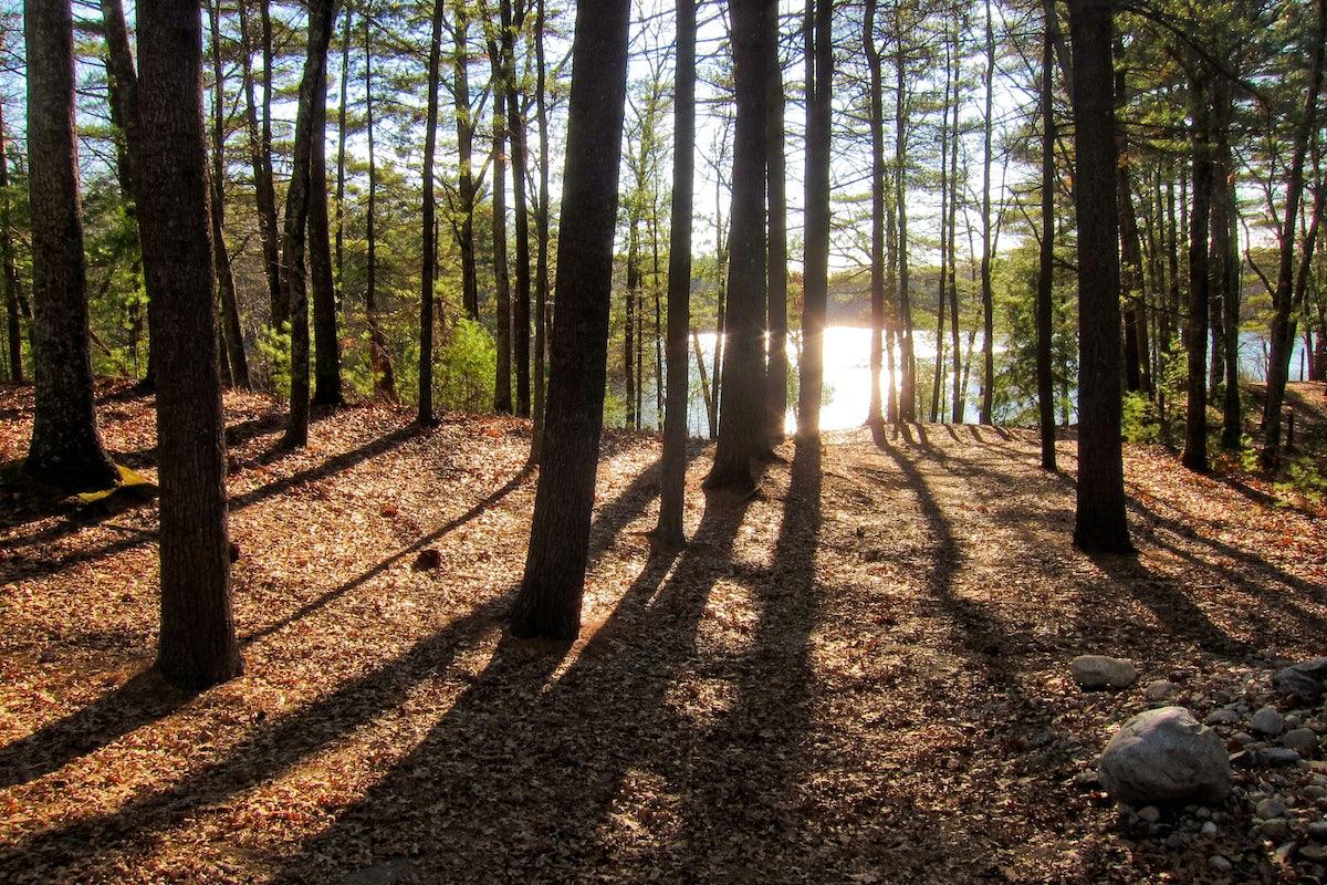 Henry David Thoreau's Magical Thinking | The New Republic