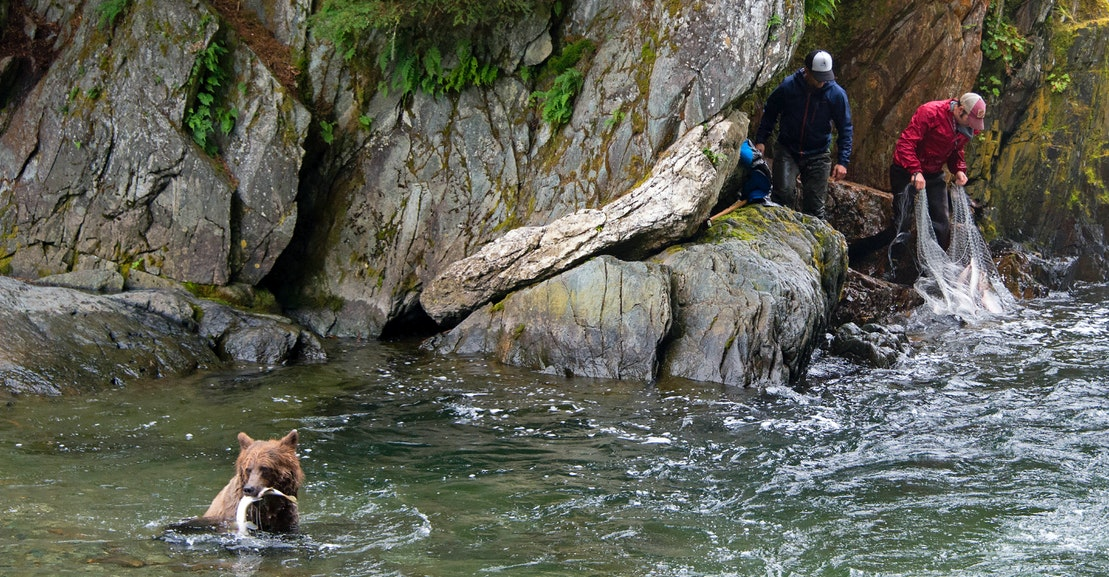 The Majestic Alaskan Rainforest in Trump's Crosshairs