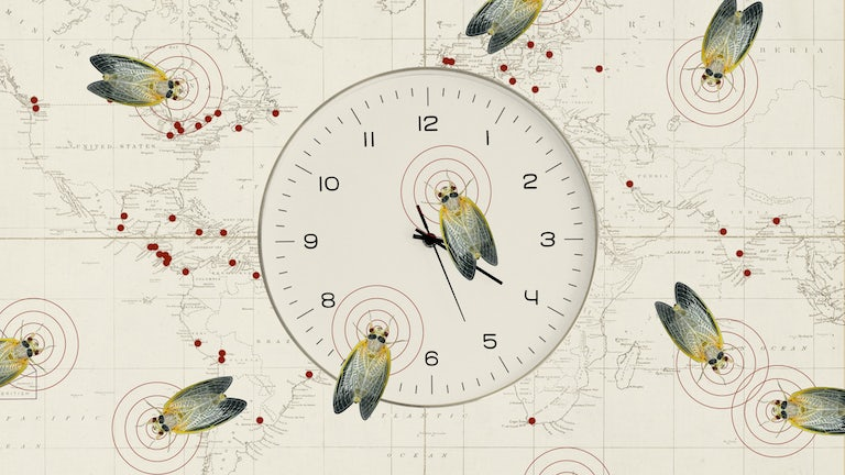 Animated cicadas on a clock overlaying a world map