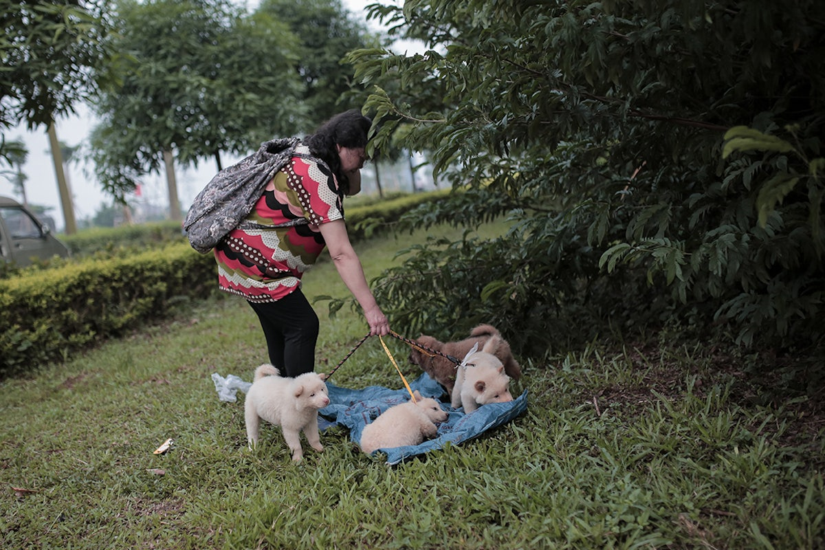 Photos: Yulin, China's Dog Meat-Eating Festival of 2014