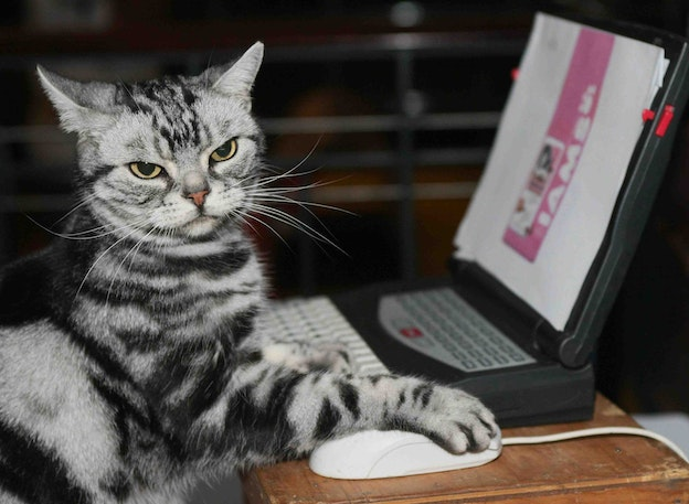 The Internet Is A Cat Video Library | The New Republic