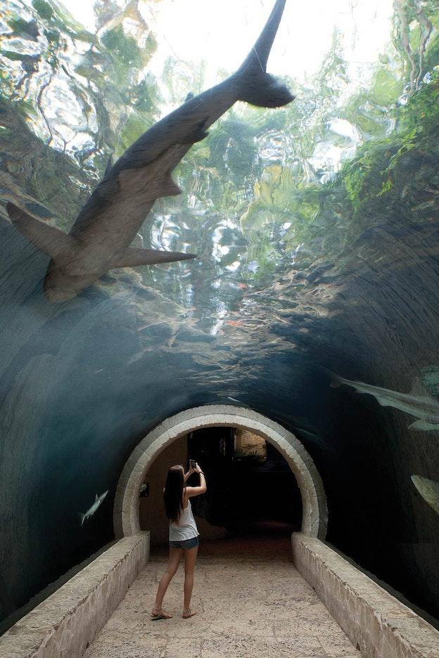 Daryl Richardson 39 S Dallas World Aquarium Causes Zoo