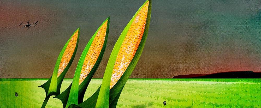 Corn Wars