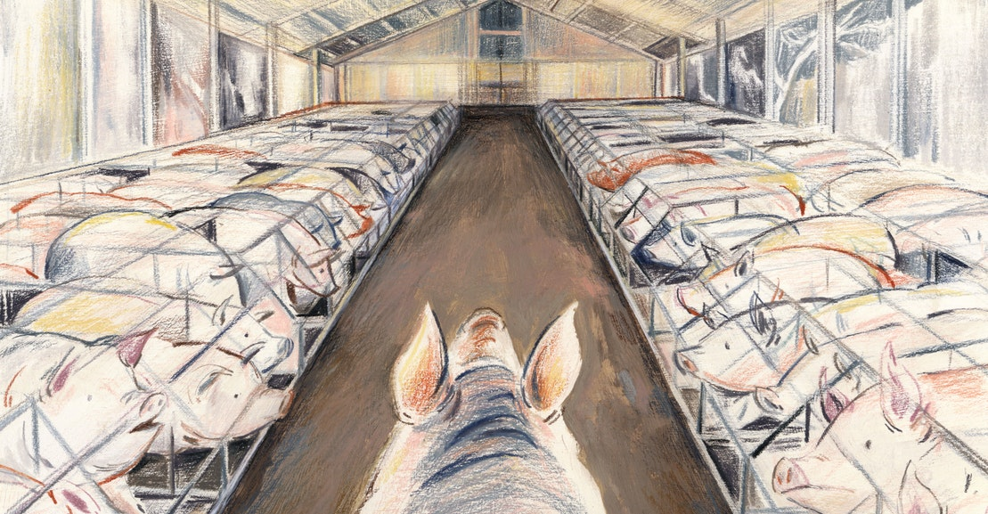 The Meat Industry's Bestiality Problem | The New Republic