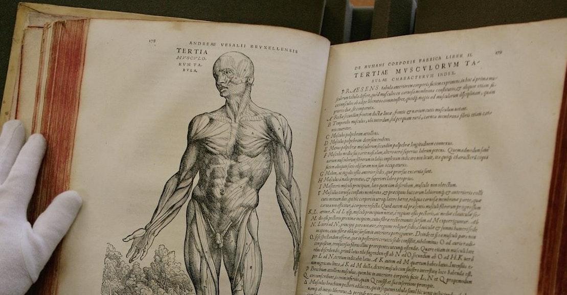 Hugh Aldersey-Williams Anatomies: Cultural History of the Human Body ...