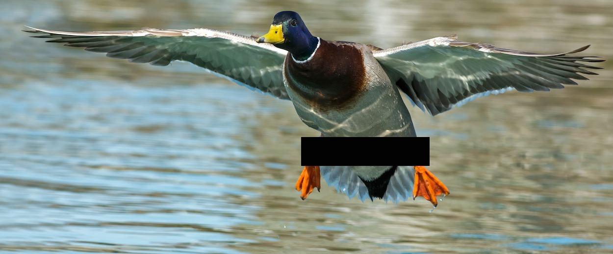 Ver penelope menchaca desnuda xxx