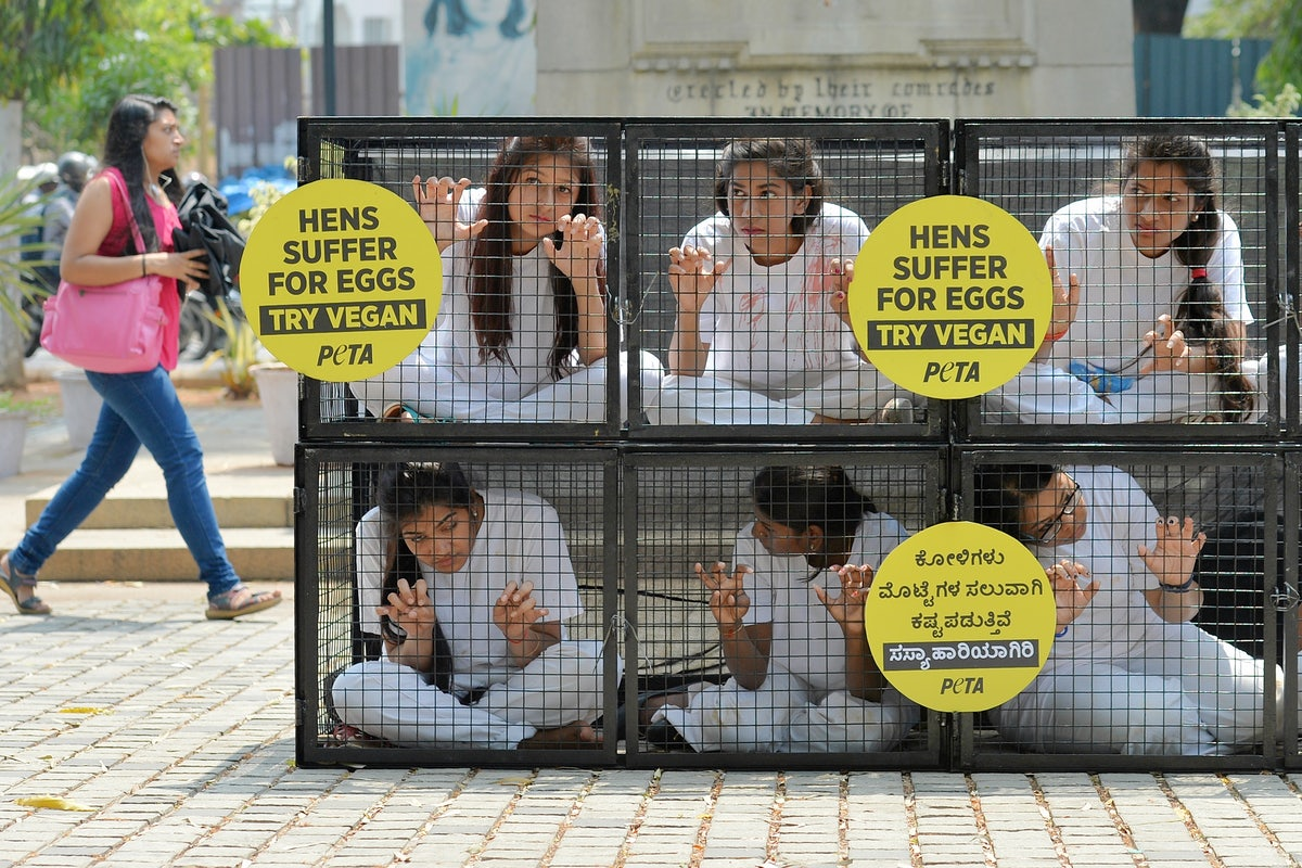 animals should not be kept in cages persuasive essay